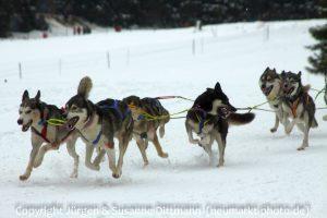 Huskyrennen in Haidmühle